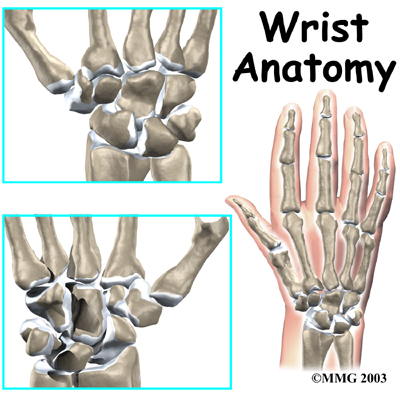 Tendonitis In The Wrist. The anatomy of the wrist joint