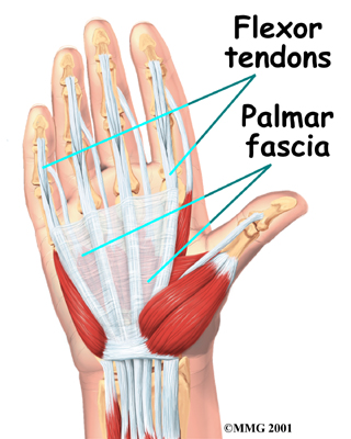 Physical Therapy In Perrysburg For Hand